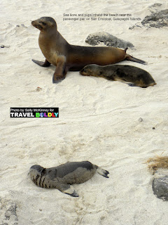 Travel Boldly Galapagos Island - Sea lions and pups inhabit the beach near the passenger pier on San Cristobal.