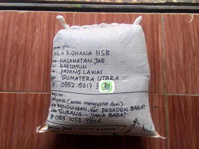 Benih Pesanan   LAILA ROHANA Padang Lawas, Sumut.  (Setelah Packing)