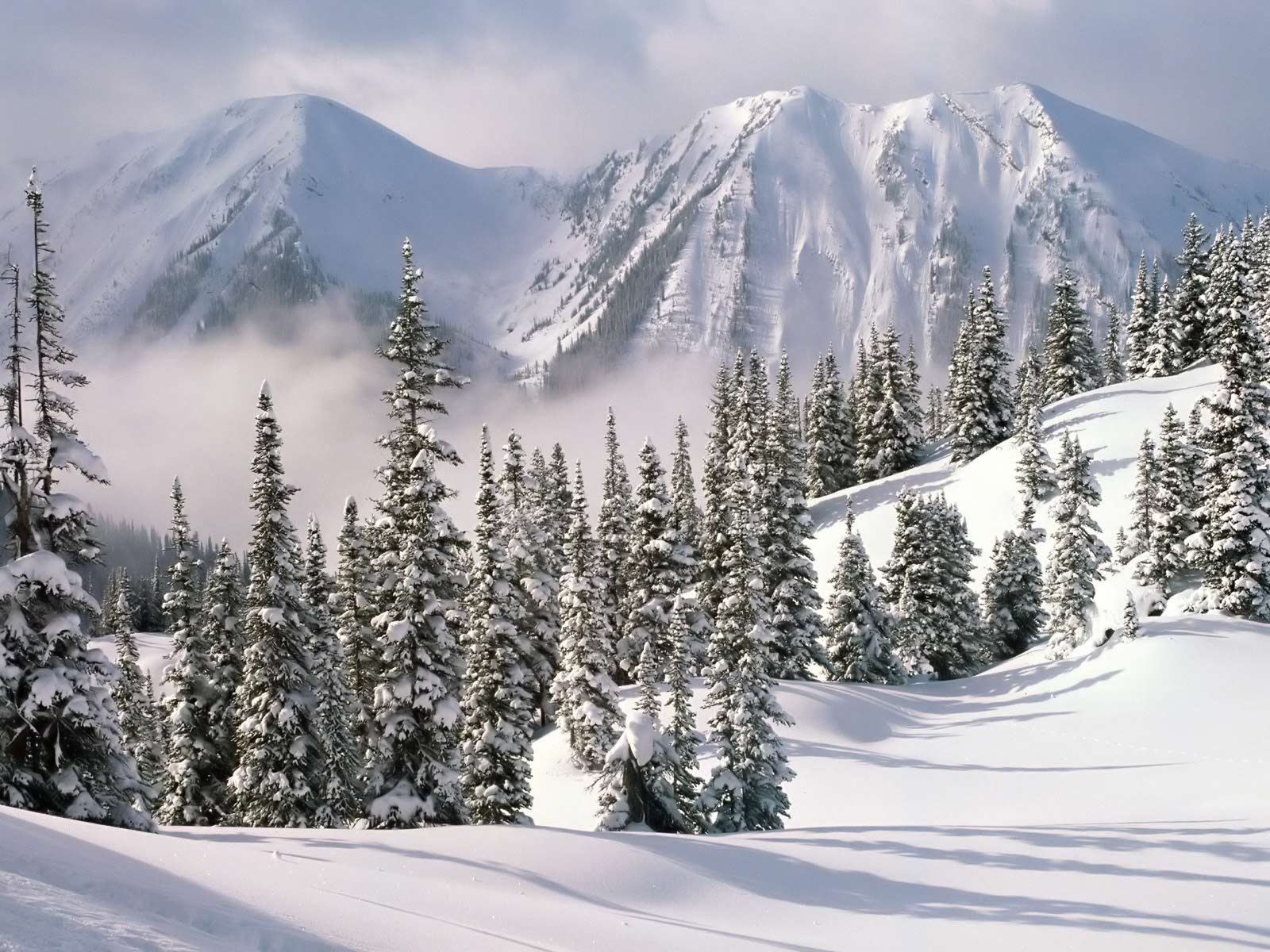 Helga Weaver: Winter Scene Hd