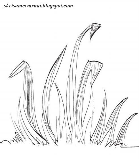 Martias Db21 Gambar Mewarnai Rumput Dan Bunga