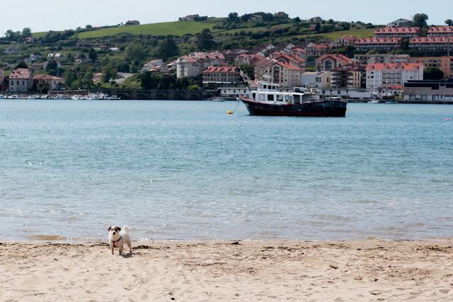 Amy en la playa para perros de San Vicente de la Barquera