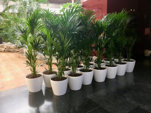 Planten huren voor bedrijf events kantoorruimte beurzen