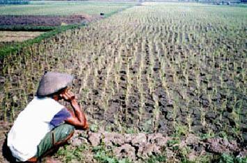 Sebutkan Contoh Bencana Akibat Pemanasan Global Di Asia Tenggara