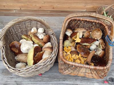 grzyby 2018, grzyby w lipcu, grzyby na Orawie, grzyby na Babiej Górze, opady deszczu w górach