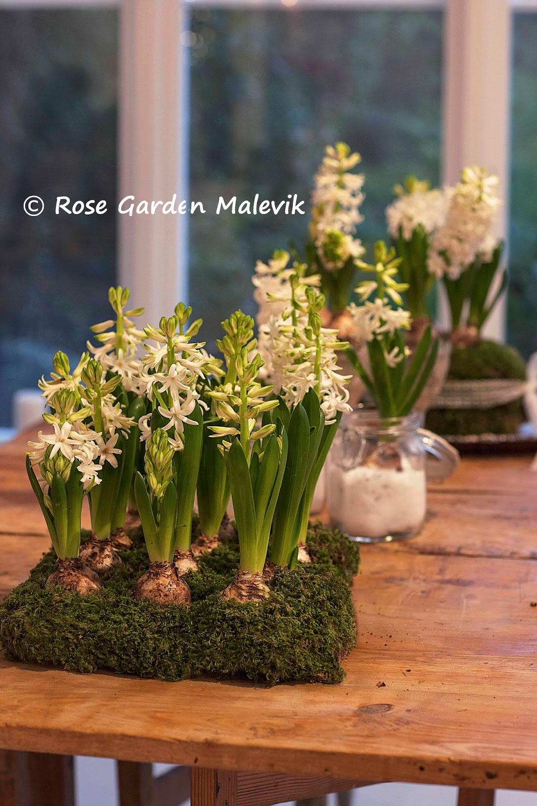 Rose garden malevik: pyssel med hyacinter ~ arrangement with hyacinths