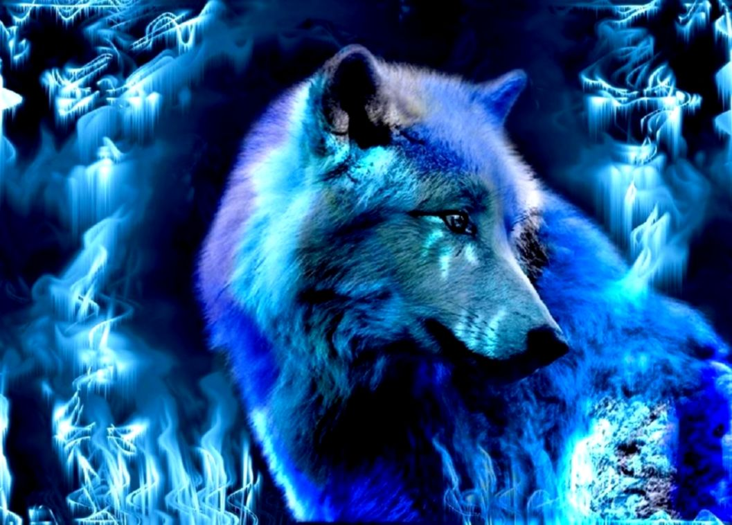 Blue Wolf Best Hd Wallpaper Eazy Wallpapers