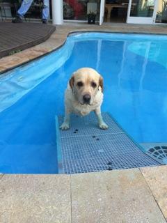 rampa para piscinas para cães