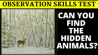 Can you find the hidden animals?