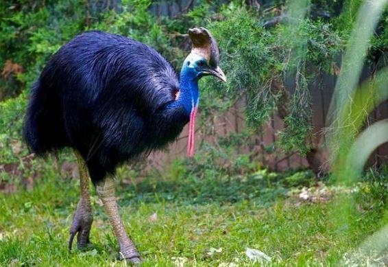 Άνδρες τεράστιο πουλί
