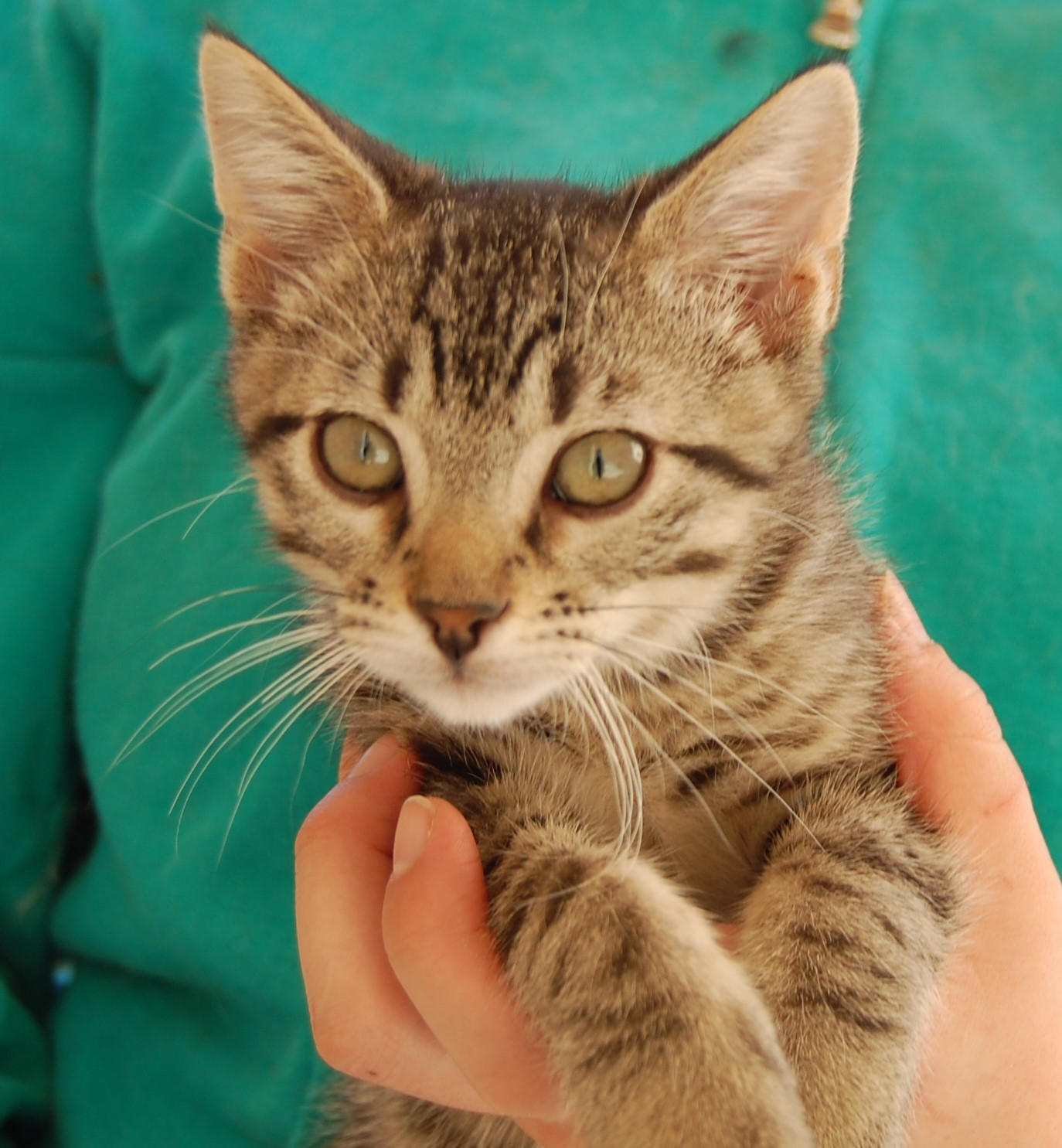 Rescued kittens need loving forever homes   Leicester