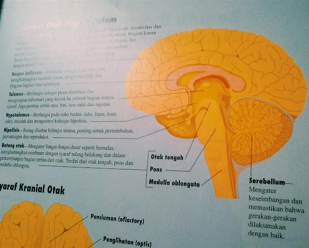 memahami otak kita