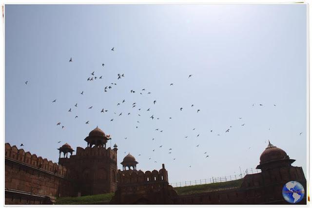 Os corvos da Índia!
