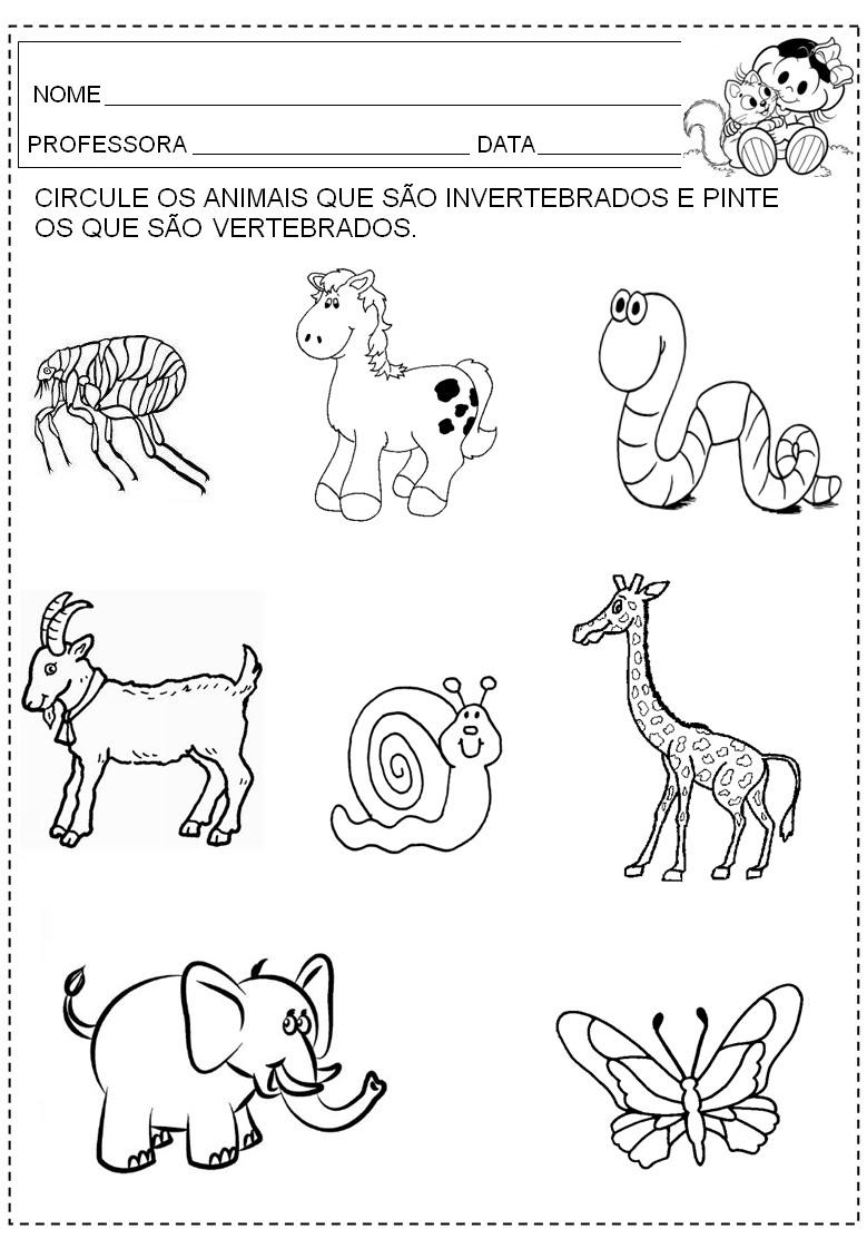 Vertebrados E Invertebrados Para Colorear Imagui
