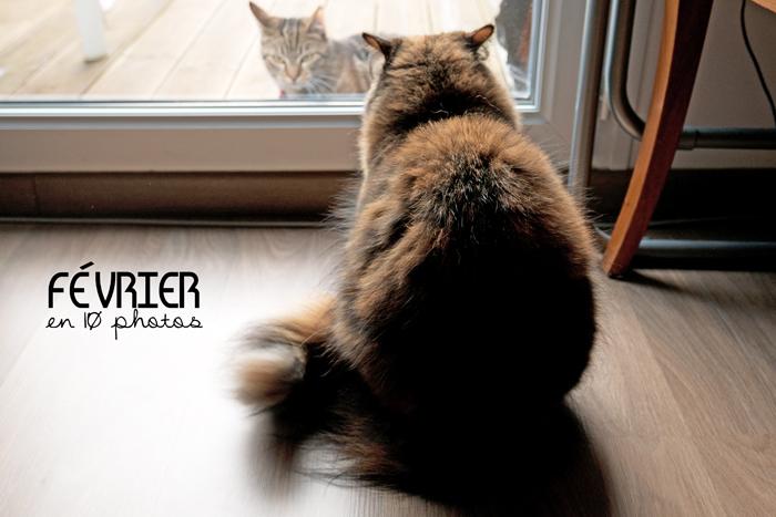 Pixelle mon chat n'est pas contente d'apercevoir que le chat des voisins vient sur notre terrasse