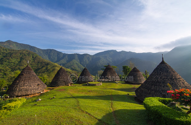Waerebo; Wae Rebo; Mbaru Niang; Denge; Dintor; Manggarai; Desa Adat Waerebo; Ruteng; Flores Overland; Traditional House of Waerebo; How to get Waerebo; History of Mbaru niang; Award of Exellence World Heritage; Unesco World Heritage; Rumah Adat Manggarai; Rumah Mbaru Niang; Bajawa; Traditional House in Flores; Traditional houses of East Timur; Nusa Tenggara Timut; East Nusa Tenggara; Travel to East Nusa Tenggara; Transportation to Waerebo; Kampung Waerebo; Traditiona Village of Waerebo; Indonesia Traditional House; Heritage of Indonesia; stock photo; culture stock photo; indonesia stock photo; indonesia photo; foto wisata; daerah wisata indonesia; tourism indonesia; amazing place indonesia; place to visit in indonesia; travel photographer; assignment for photographer; culture photo of indonesia