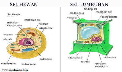 Pengertian, Bagian-bagian, dan Fungsi Sel di Hewan dan Tumbuhan