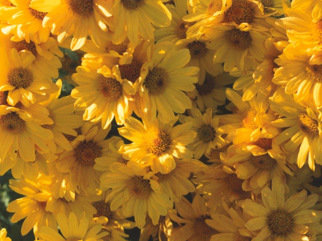 Perihal Molek: Perihal Bunga