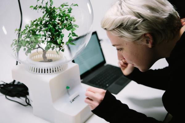 Así es la máquina de Microsoft que te permite hablar con tus plantas