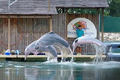 Underwater World and Dolphin Lagoon