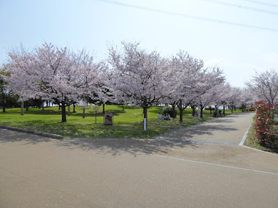 山田池公園の桜満開