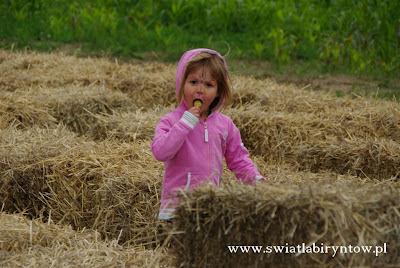 Świat Labiryntów, Labirynt w polu kukurydzy, Bliziny koło Przywidza
