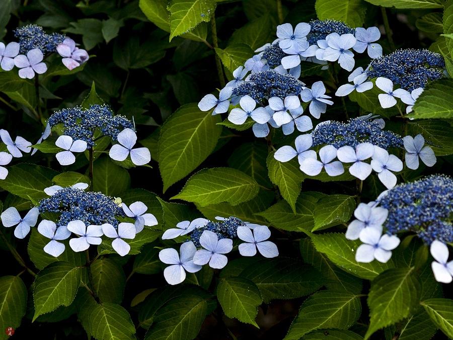From The Garden Of Zen June 2013