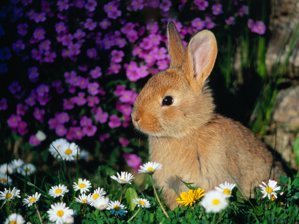 Amazon.com: Cute Bunny HD Wallpapers: Appstore for Android