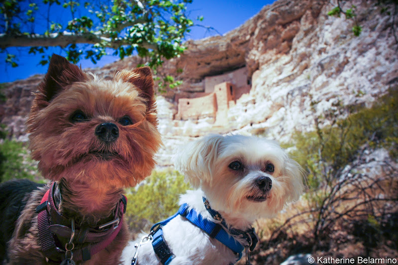Henry and Charlie at Montezuma Castle National Monument Pet-Friendly Vacations Tips for Traveling with Dogs