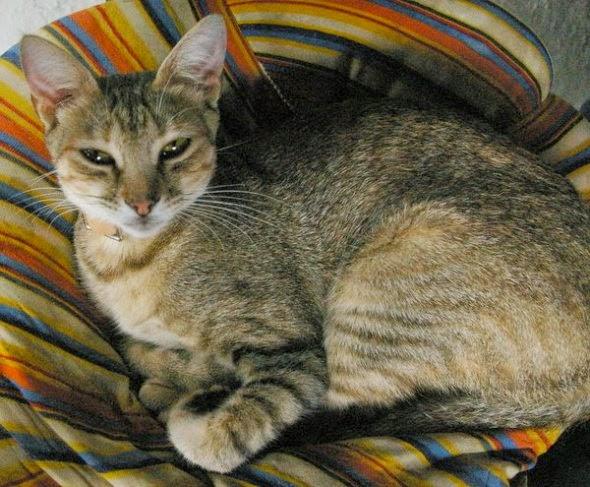 imagen Fotografia gato muy comodamente descansando