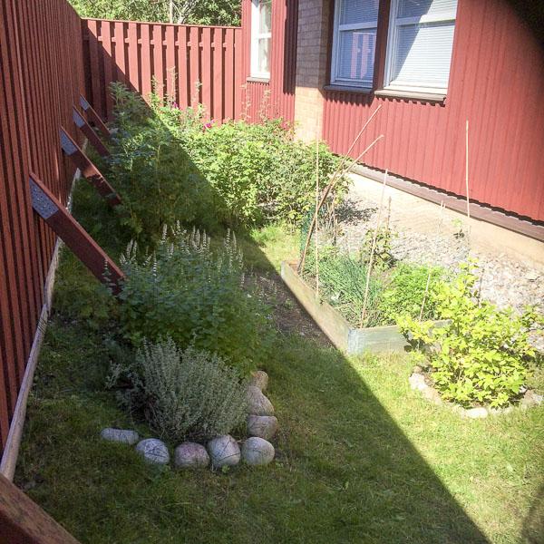 trädgård, garden