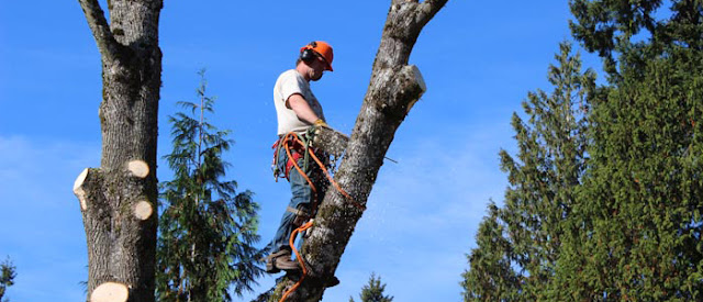 Tree Services: The Benefits of Tree Planting