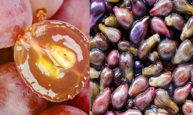 Cancer Treatment :Grapes Seed