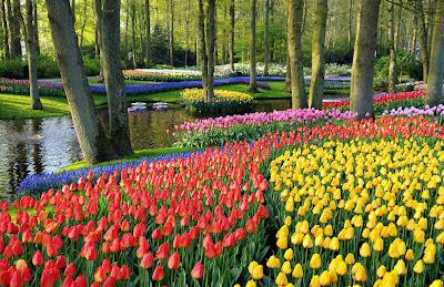 красивые-фото-цветов