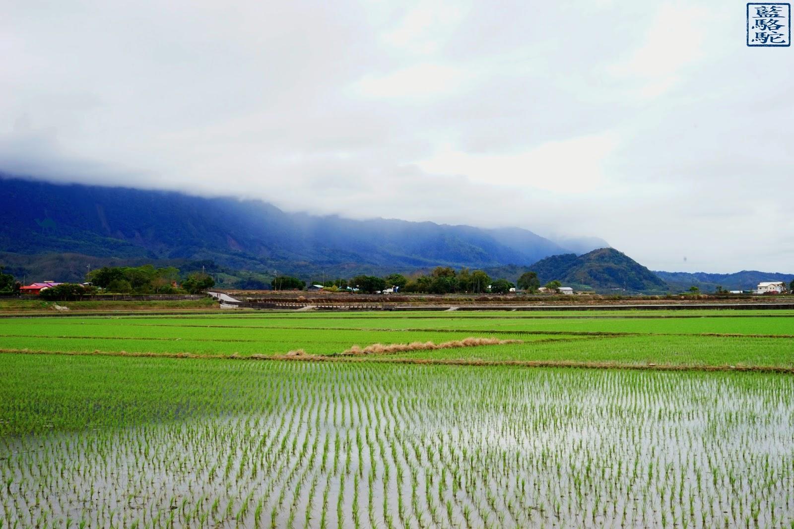 Le Chameau Bleu - Riziere dans la brume -Vacances à Taiwan - Chihshang