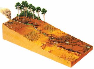 Contoh Aktivitas Manusia yang Memengaruhi Keseimbangan Lingkungan