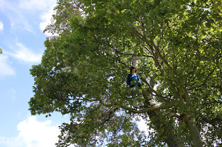 """The children said """"we need a tree climber"""", so the tree climber climbed trees as part of the den building."""