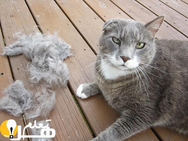 6dfd8798c القطط تصرفها مع البشر