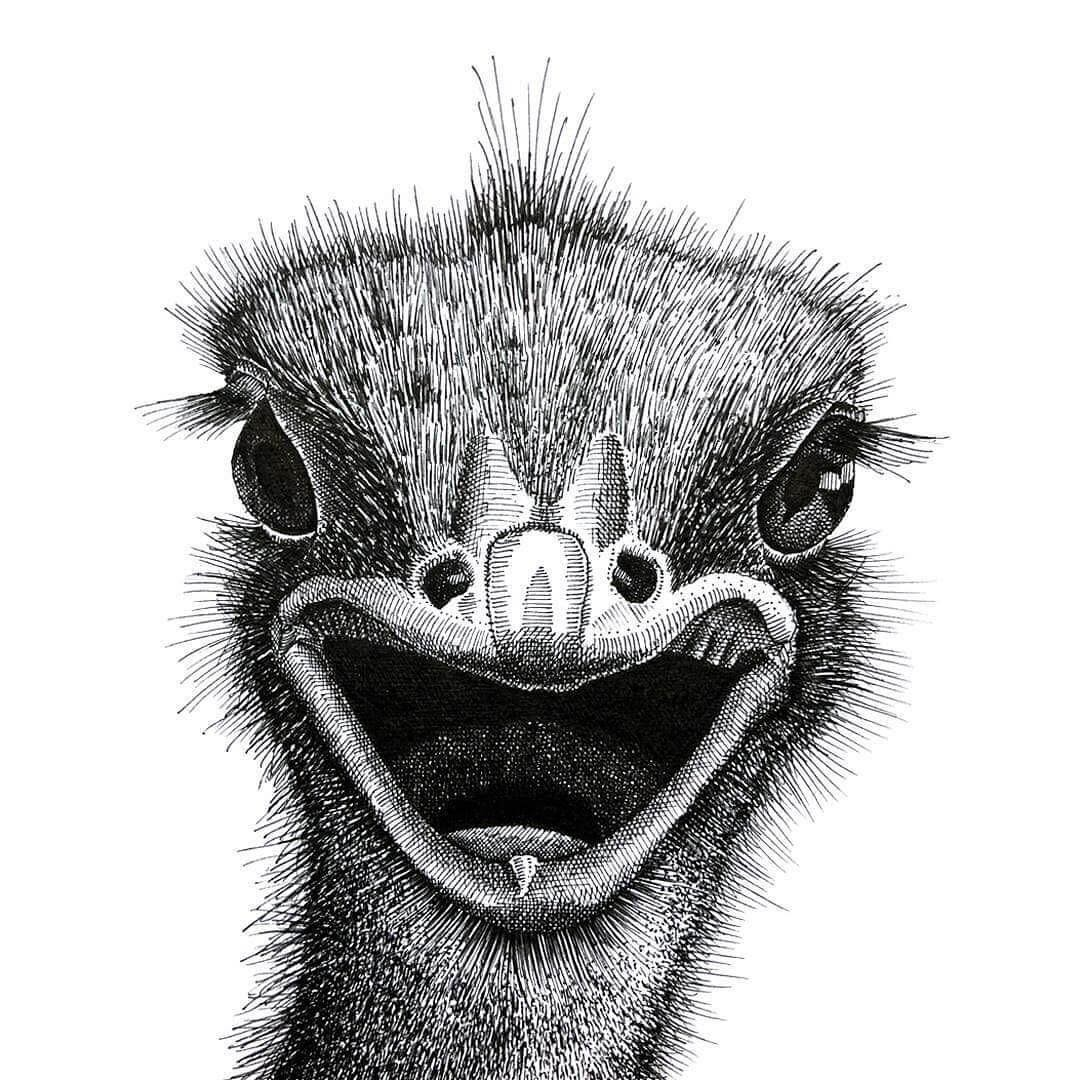 03-Ostrich-Gaspar-Animal-Stippling-and-Cross-Hatching-B&W-Drawings-www-designstack-co