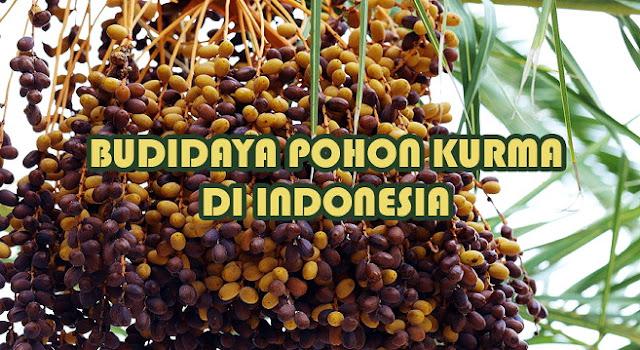Alhamdulillah, Kurma Bisa Tumbuh Dan Berbuah Di Indonesia, Begini Cara Menanamnya