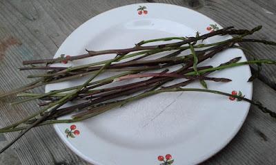 A marzo nell'orto si raccolgono erbe spontanee.