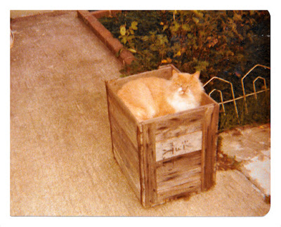 Vintage snapshot of an orange cat sitting in a planter box in 1977 at 1776 Sweetwood Drive in Broadmoor, California