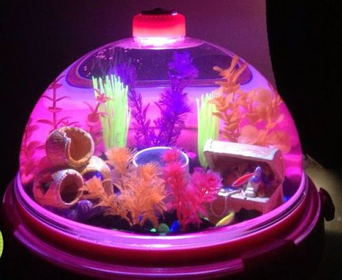 Small glass betta aquariums fish tank with light art for Betta fish tank ideas