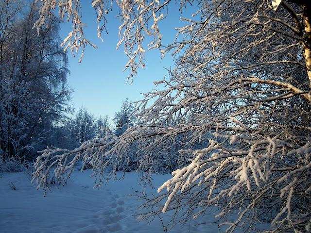 Talvi, lumi, tammikuu, huurre, puut, kotipiha