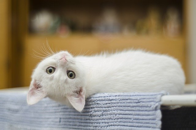 9 Fun Facts About Kittens You Should Know