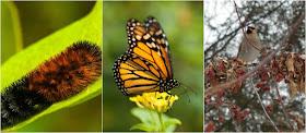 Fall Animal Behavior Lesson Ideas
