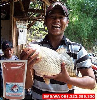 Umpan Ikan Mas Babon