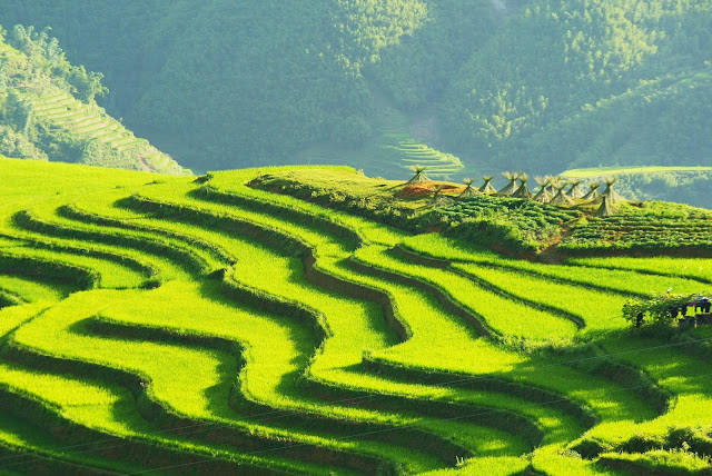 Sapa rice terrace is top 30 of natural beauty in the world