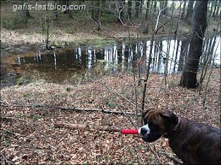 Amy am kleinen See im Wald