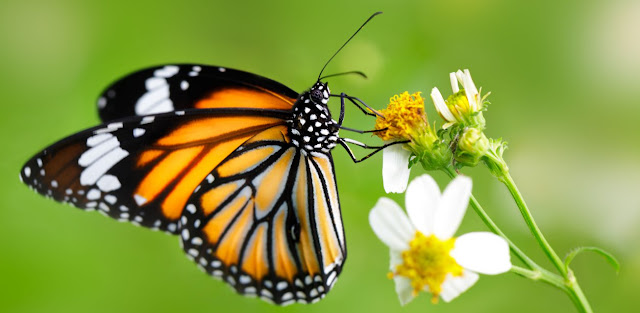Mariposa y plantas