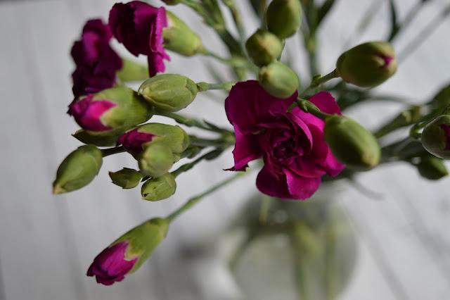kwiaty, goździki, goździk, kolor biskupi, świeże kwiaty, blog, blogger, mymixoflofe, mixoflife